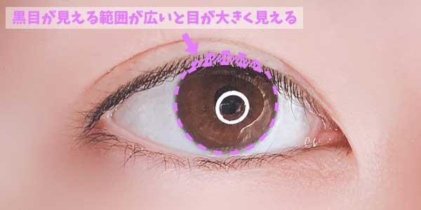 黒目の見える範囲が広いと目元が可愛く見える